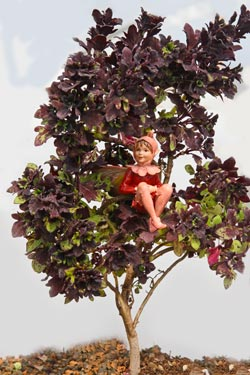 coleus_mini_maple_leaf_red_champion_fairy.jpg