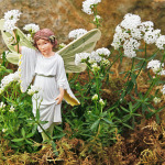 Woodruff, Tiny Sweet & Stitchwort Fairy
