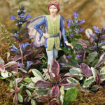Ajuga, Multicolor & Bluebell Fairy