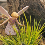 Sweet Flag, Mini Golden & Wild Thyme Fairy
