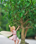 Ficus, Too Little & Rose-Bay Willow-Herb Fairy