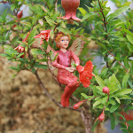 Pomegranate, Dwarf & Scarlet Pimpernel Fairy