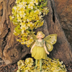 Sedum, Japanese Golden & Buttercup Fairy